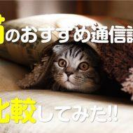 猫資格の通信講座を比較しましたおすすめは