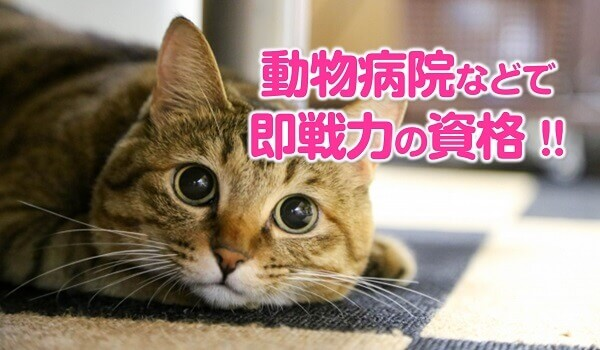 即戦力の猫資格