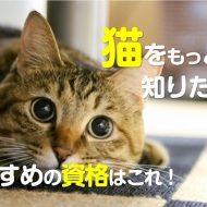 猫のおすすめ資格はこれどんな学習内容